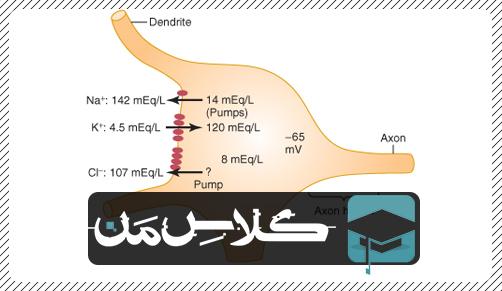 فیزیولوژِی دستگاه عصبی   جزوه فیزیولوژِی حواس ویژه : جزوه فیزیولوژی بخش حسی (قسمت دوم)